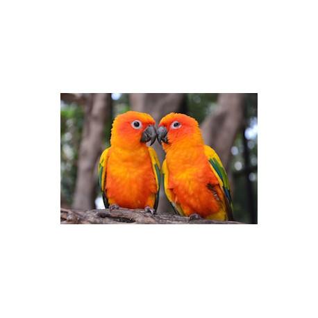 Carré velours ara macaw
