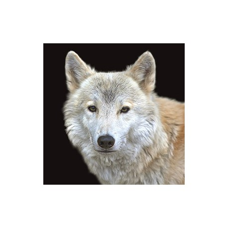 Carré velours «Loup» fond noir